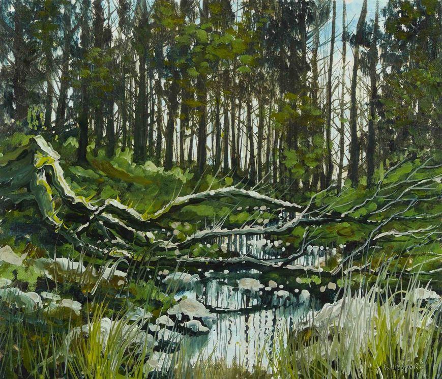 Sliabh Bloom Woodland