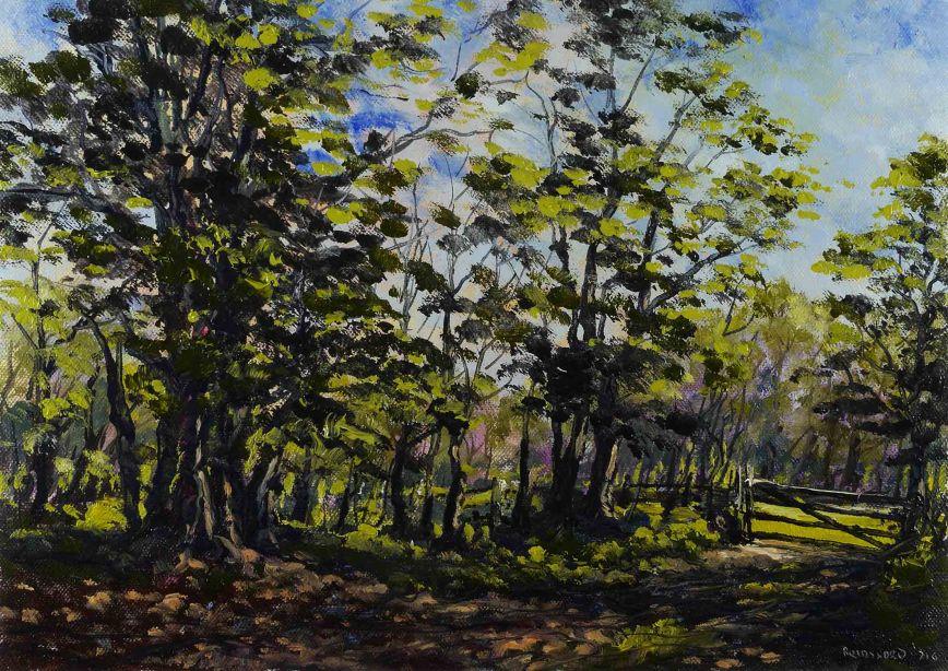 July Woodland